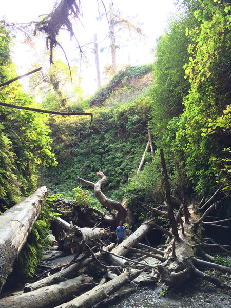 Massive deadfall commonly washes down Fern Canyon.