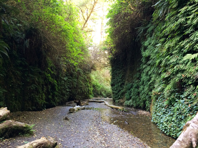 Steep walls lined with lush ferns grace the Fern Canyon Loop Trail.