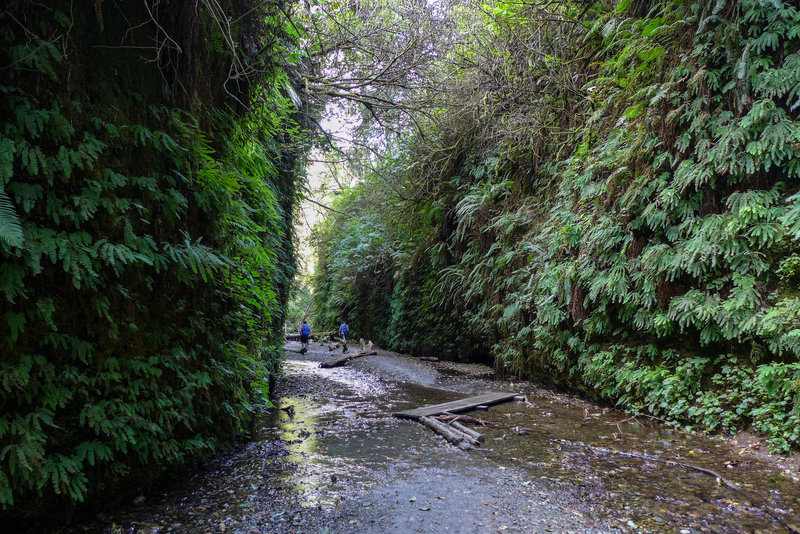 Fern Canyon has a trickle of a stream rolling through it.