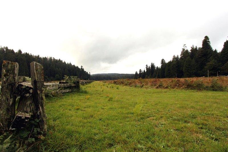 Elk Prairie.