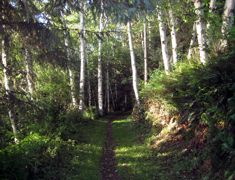 A lovely section of singletrack greets visitors on the Coastal Trail: Flint Ridge Section.