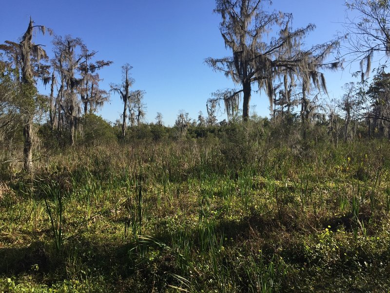 Freshwater marshes adorn the Jean Lafitte National Historical Park and Preserve.