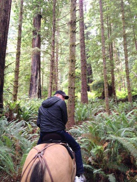 Dense ferns along the Orick Horse Trail.