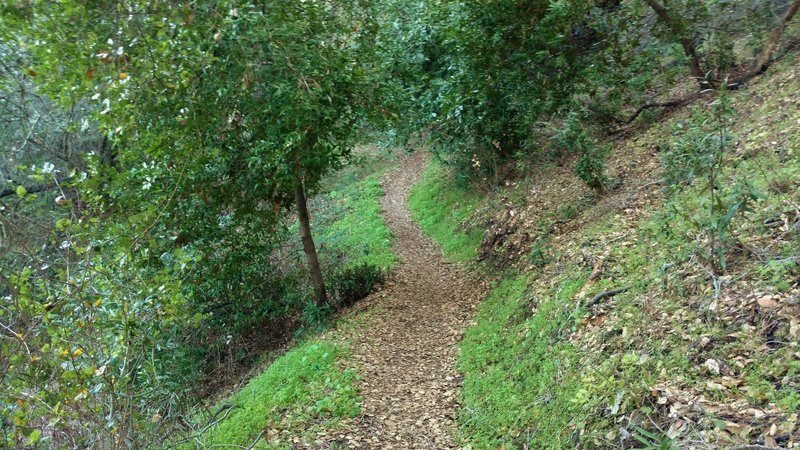 The wooded hillsides of the New Almaden Trail make for a scenic day trip.