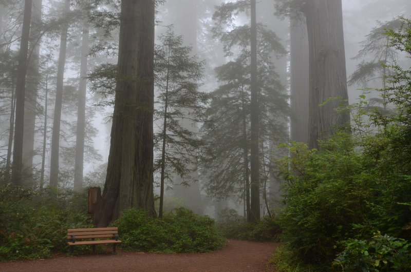 Lady Bird Johnson Grove on a lovely, misty day.