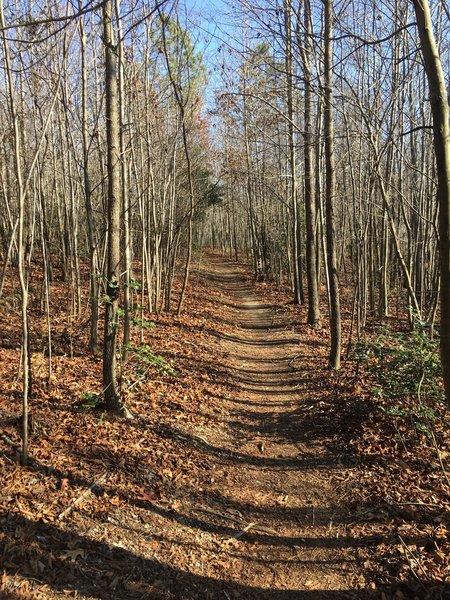 The Saint Mary's Lake Loop Trail offers visitors the serenity only an autumnal forest can provide.