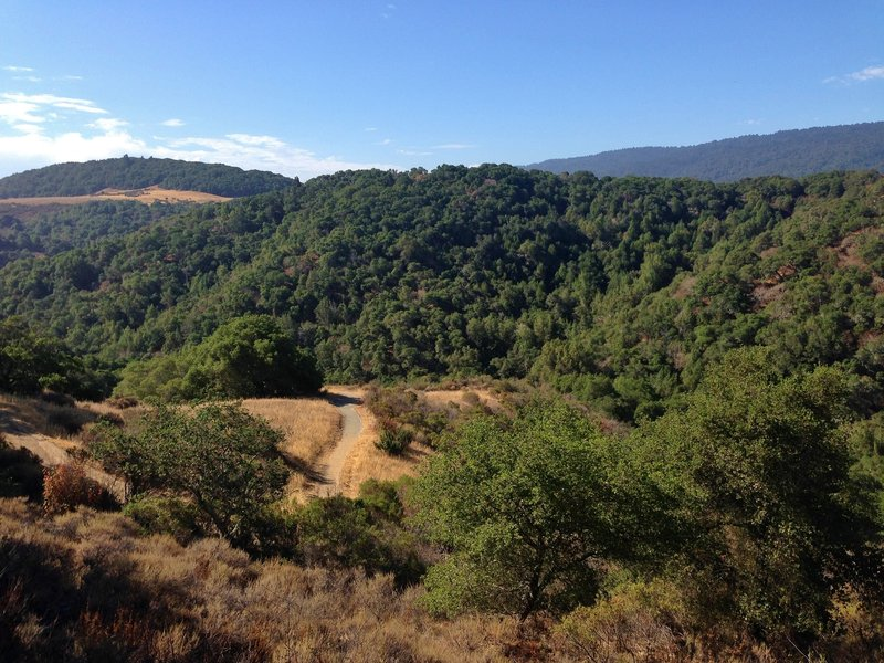 Pulgas Ridge Open Space views.