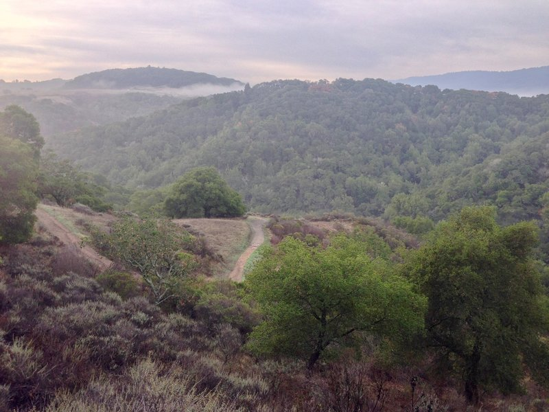 A view from the Dick Bishop Trail in the Pulgas Ridge Open Space Preserve.