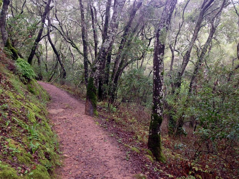 On the Polly Geraci Trail in Pulgas Ridge Open Space Preserve.