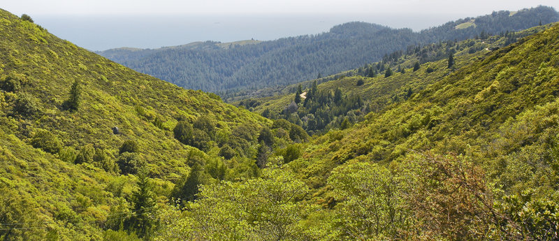 The view from Fern Creek Trail on Mount Tamalpais is captivating.