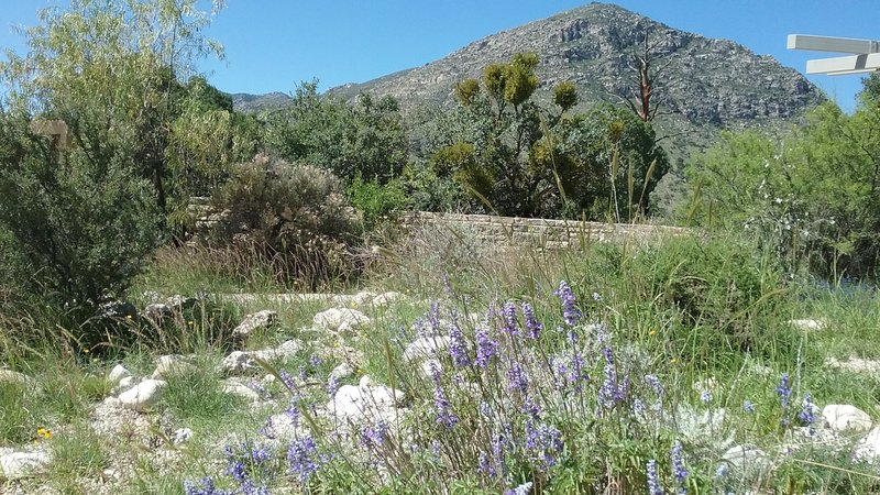 The start of the trail is often peppered with wildflowers.
