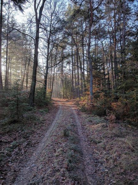 A woodland track traipses through leafy woods.