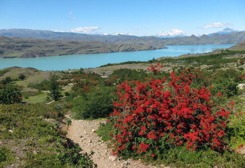 Lago Nordenskjöld in Torres del Paine National Park.