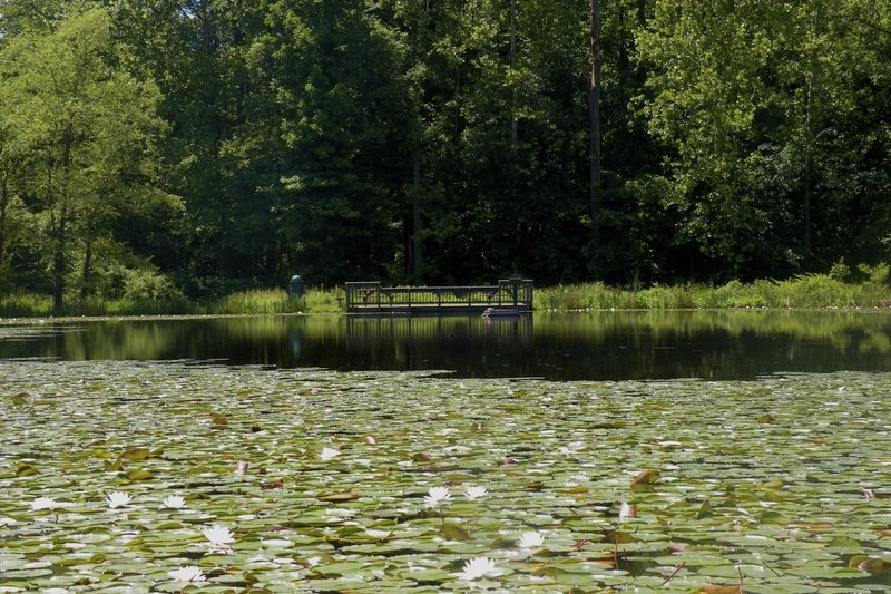 A gorgeous lily pond awaits visitors to Ellanor C. Lawrence Park.