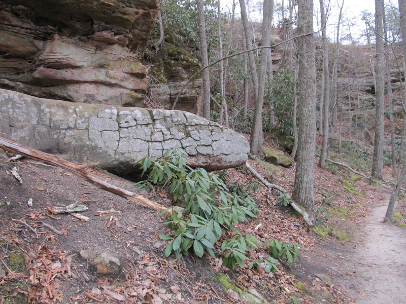 """Serpent Rock (spot the """"forked"""" tongue) lives on the trail right behind Double Arch."""