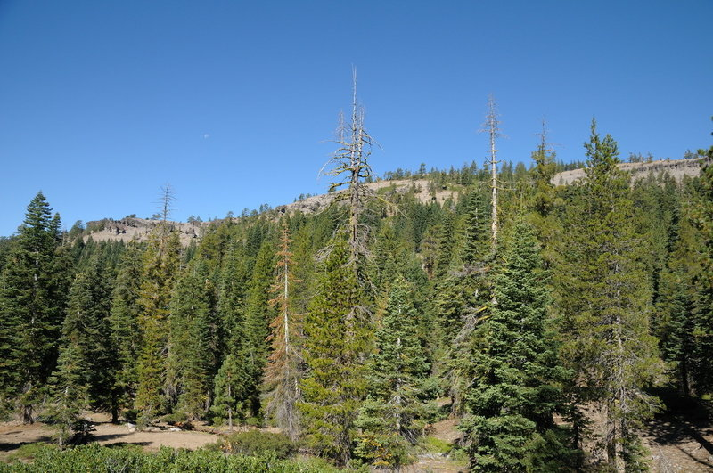 Palisade Peak pokes through the trees when seen from the Castle Pass Trail in Royal Gorge.