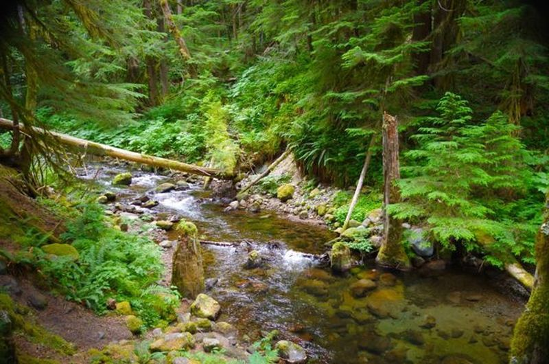 Lost Creek runs alongside the trail. Photo by John Sparks.