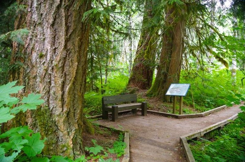 The Lost Creek Nature Trail has interpretive signs that explain the natural and geologic processes in the area. Photo by John Sparks.
