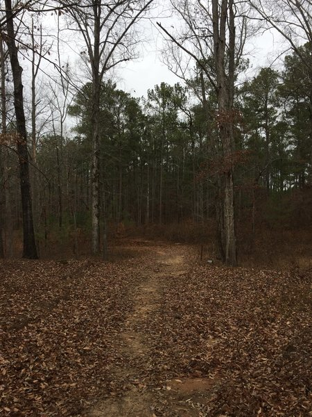 The Charlie Elliot Wildlife Center Multi-Use Trail meanders through peaceful woodlands.