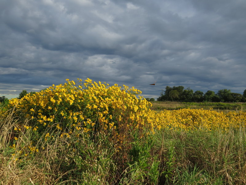 Late summer wildflowers grace the Chestnut Grove Natural Area.