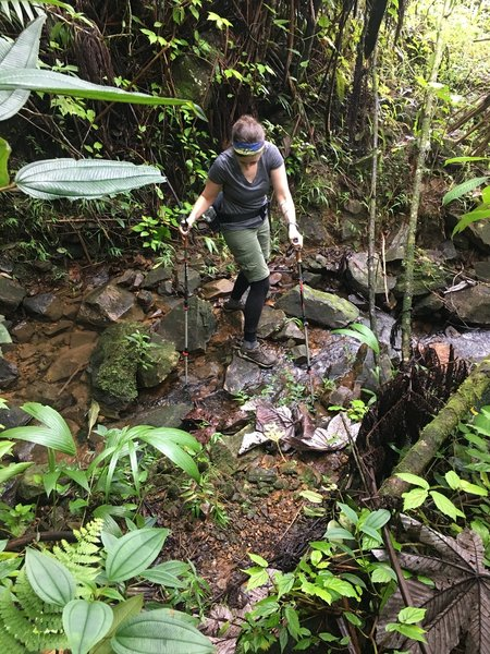 Stream crossings are doable on the Tradewinds Trail.