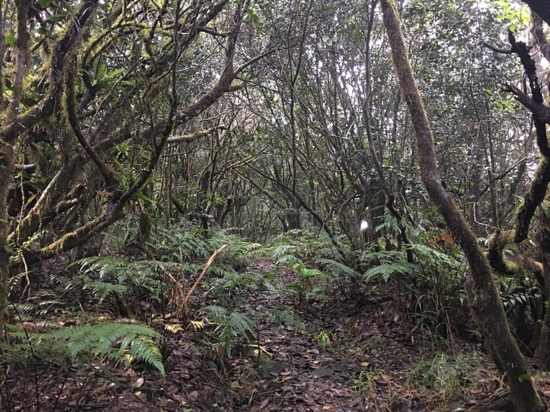 The Tradewinds Trail traverses a dwarf forest ecosystem along its route.