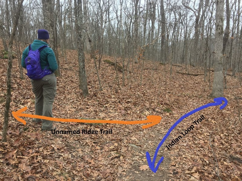 This is a location of confusion for falling off the loop trail. The more beaten trail makes a hard turn and ascends the ridge. This will make it back and offers many views from above. The loop trail stays below the bluff.