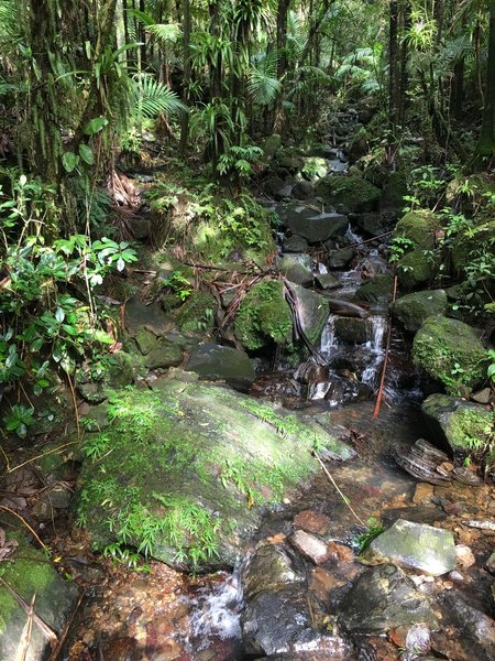 Multiple waterfalls have been known to grace the El Yunque Trail at any given time.