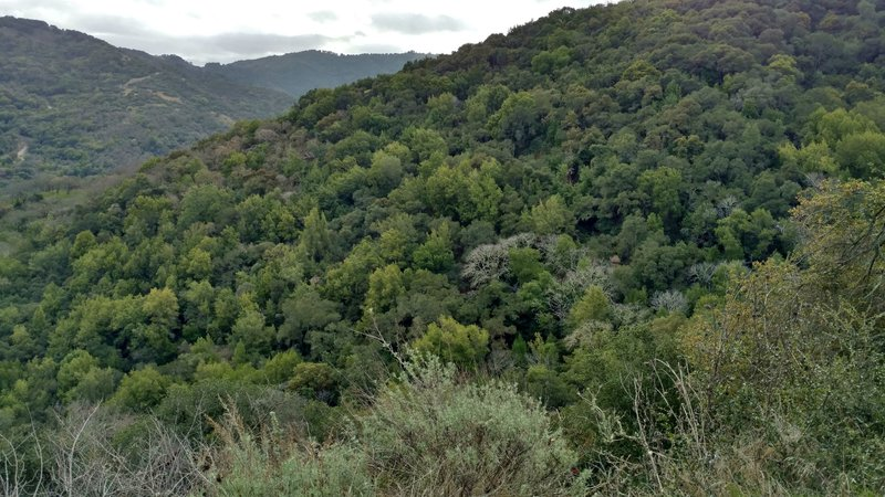 The rugged hills of southeastern Quicksilver Park are quite scenic from the English Camp Trail.
