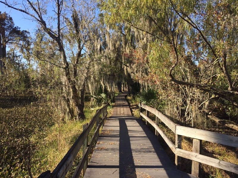 The Marsh Overlook Trail offers a scenic boardwalk experience amidst dramatic, wispy foliage.