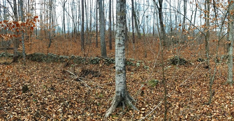 An old stone wall marks a bygone property line from when this area was once agricultural land.