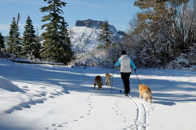 In wintertime, the trail out towards Lyle's Lookout makes for a wonderful xc ski with dramatic views of Devil's Peak in the background.