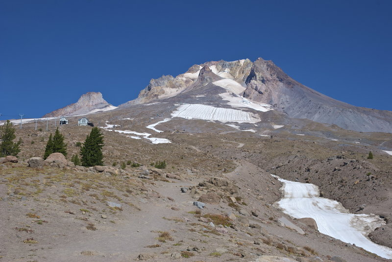 A final grouping of trees marks the transition above timberline on Mount Hood.