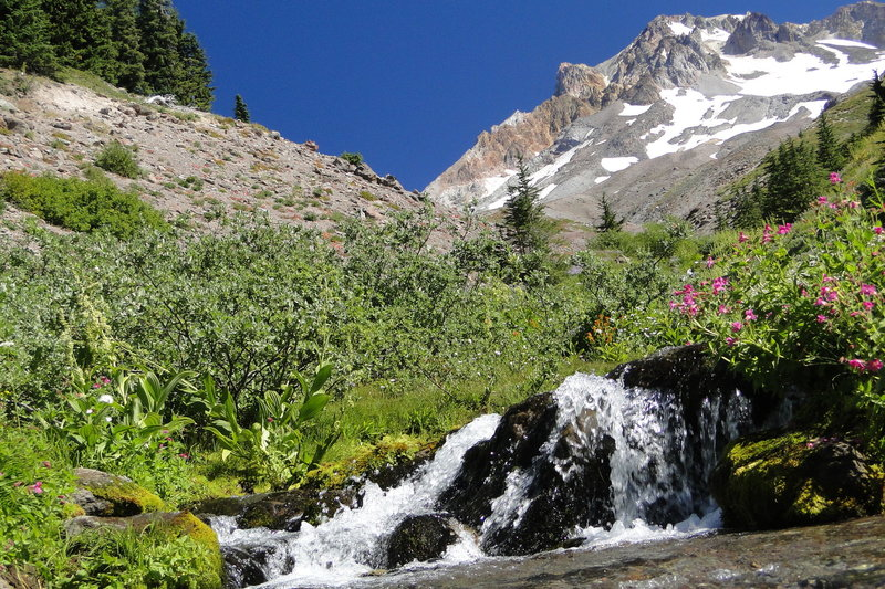 The Paradise Park Loop Trail crosses rushing water on the flanks of Mt. Hood. Photo by Guy Meacham.