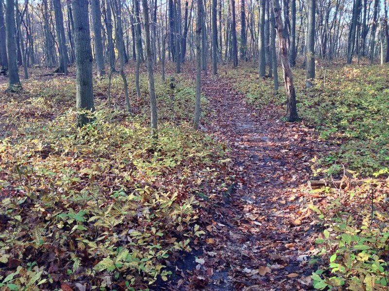 Cheesequake State Park offers beautiful deciduous forests along the Yellow Trail.
