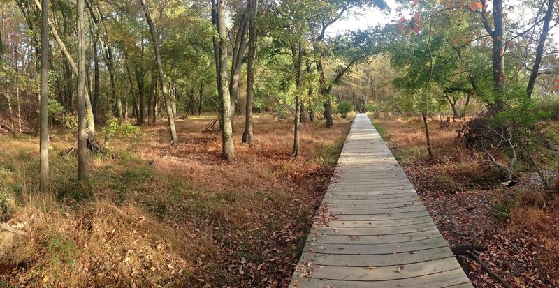 A boardwalk traverses dense hardwood forests on the Green Trail in Cheesequake State Park.