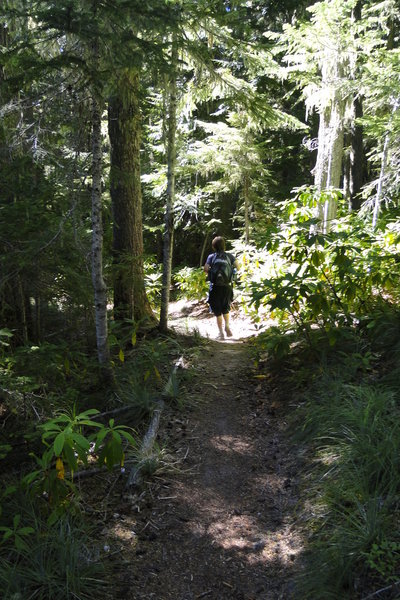 Paradise Park Trail is a long, steady, 6-mile trail to the wildflower meadows on the upper flanks of Mt. Hood. Photo by Guy Meacham.