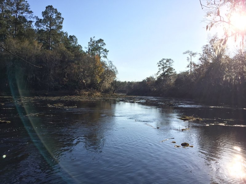 The Suwannee River gleams in the afternoon sun.