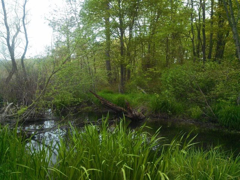 Beaver Brook is quite verdant in the spring.