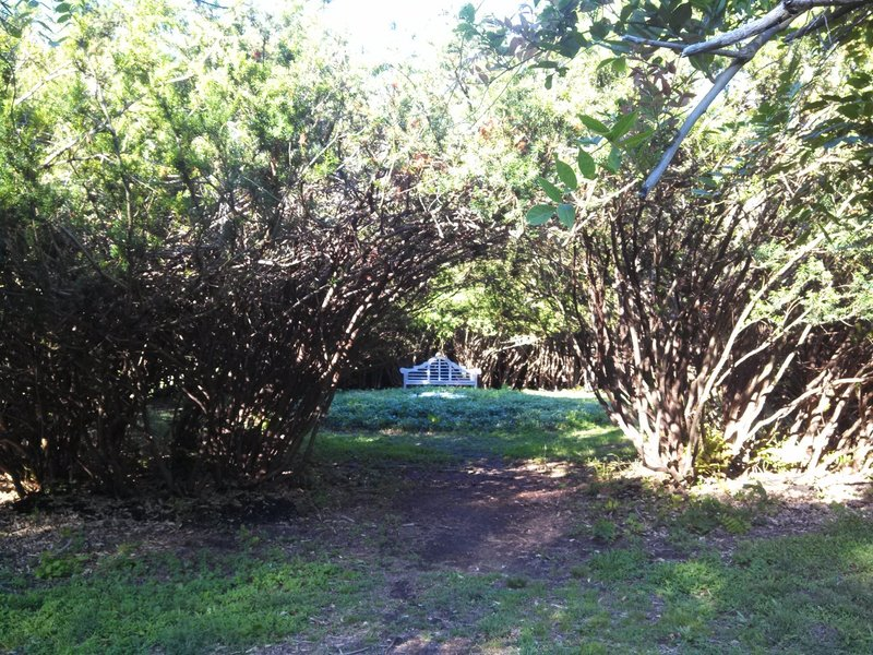 This spot makes for a quiet place to sit in a circle of yew trees.