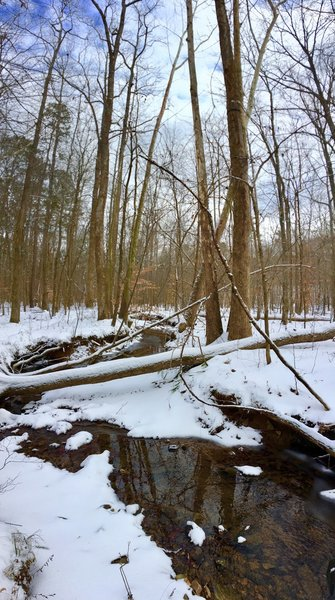 The descent down Piney Mountain Trail offers picturesque woodland views.