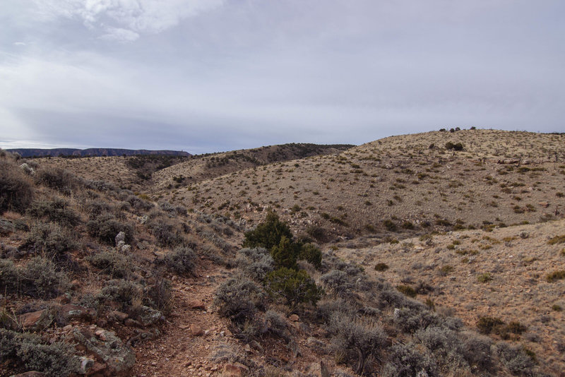 This is a view looking at the desert portion of the trail.