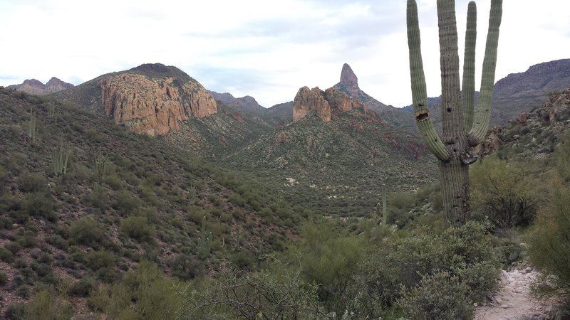 A centuries-old saguaro graces this view into the heart of the Superstitions.