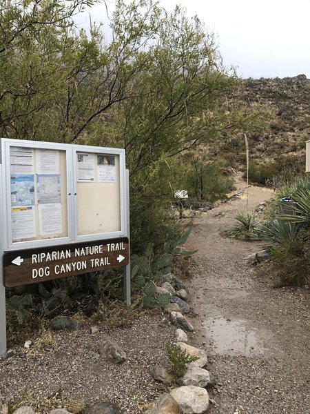 An informative kiosk is located at the trailhead near the Oliver Lee Memorial State Park Visitor Center.