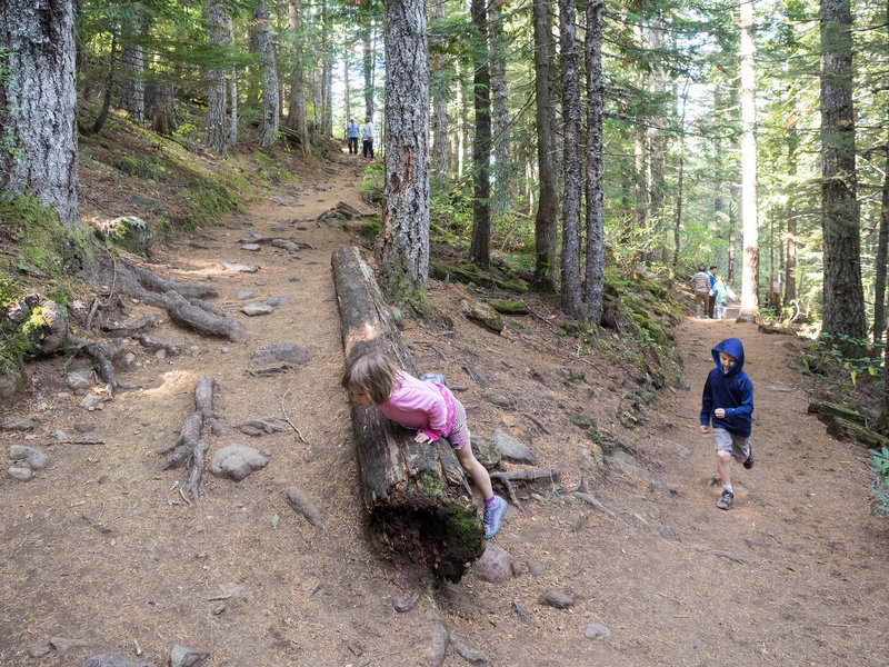 The Mirror Lake Trail is good fun for children. Photo by Dolan Halbrook.