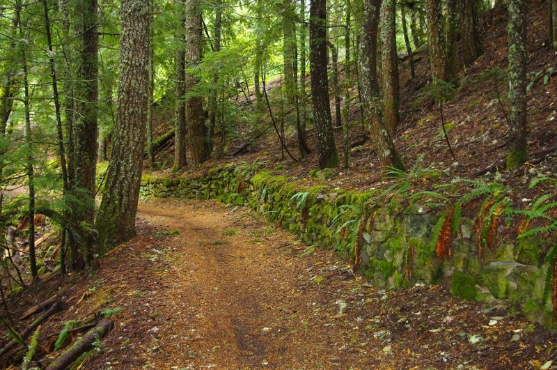 This part of Pioneer Bridle Trail is below the tunnel and touts a historic, moss-covered rock wall. Photo by USFS.