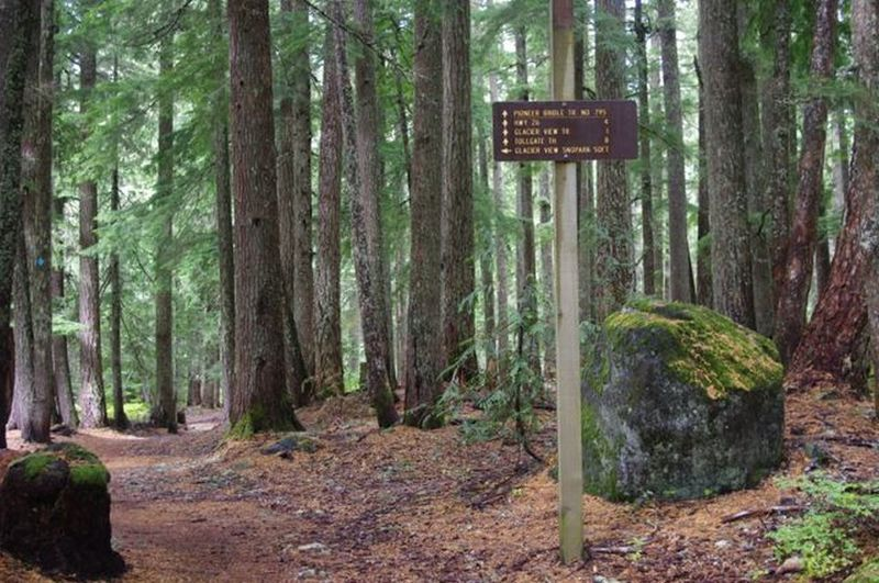 The Pioneer Bridle - Crosstown Trail junction is located amongst towering evergreens. Photo by John Sparks.
