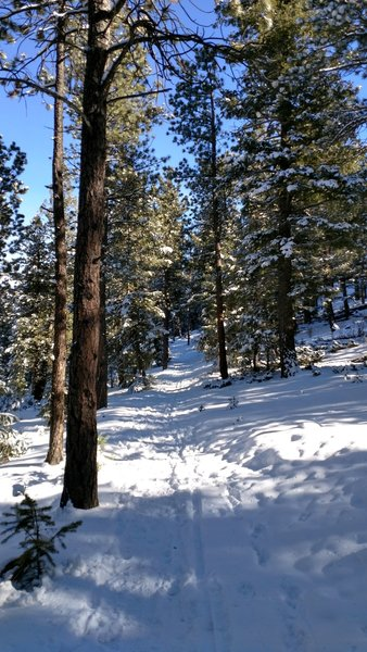 Serious snow makes the Hidden Fawn Trail a little spicy!