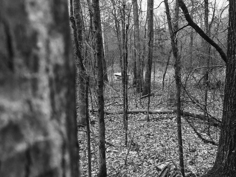 A spooky shack hides amongst the hardwoods on Earthquake Ridge.