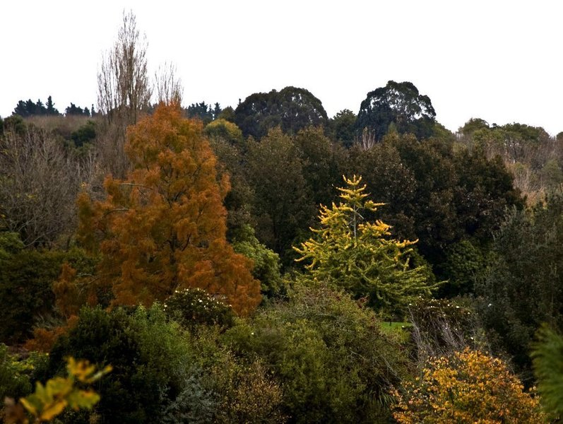Fiery fall colors grace Hamilton Gardens in the autumn.